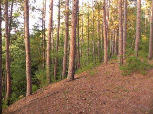 Warming climate has consequences for Michigan's forests