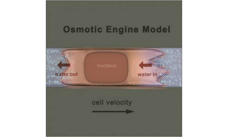 Water-based 'engine' propels tumor cells through tight spaces in the body