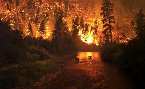 What do wildfires have to do with climate change?