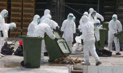 What is H7N9 bird flu?