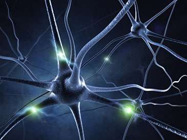 Why do some neurons respond so selectively to words, objects and faces?