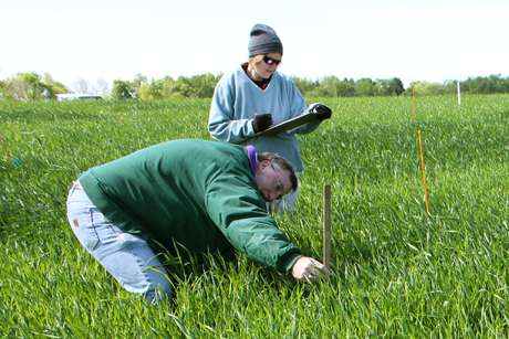 Winter harvest boosts feedstock security