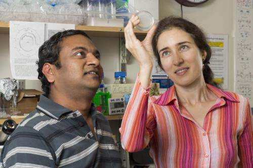 Worms' mental GPS helps them find food