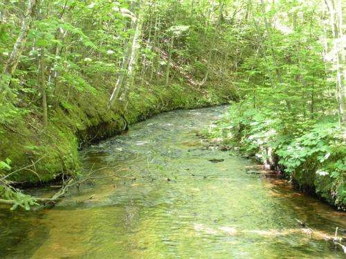 Wrangling data flood to manage the health of streams