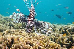 You can hear the coral reefs dying