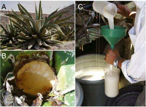 Pottery Shards Offer Evidence Of Pulque Production In
