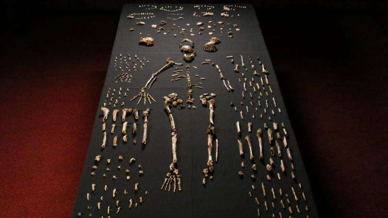 All about the fossilized bones of (maybe) Homo naledi