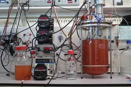 Anammox synthesizes 'rocket fuel' hydrazine with special protein