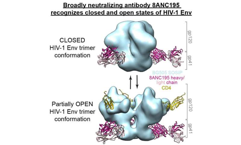 An antibody that can attack HIV in new ways