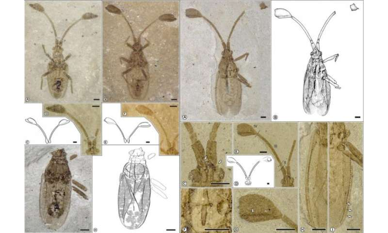 "A new fossil lace bug with unusual antennae joins the ""Big"" club"