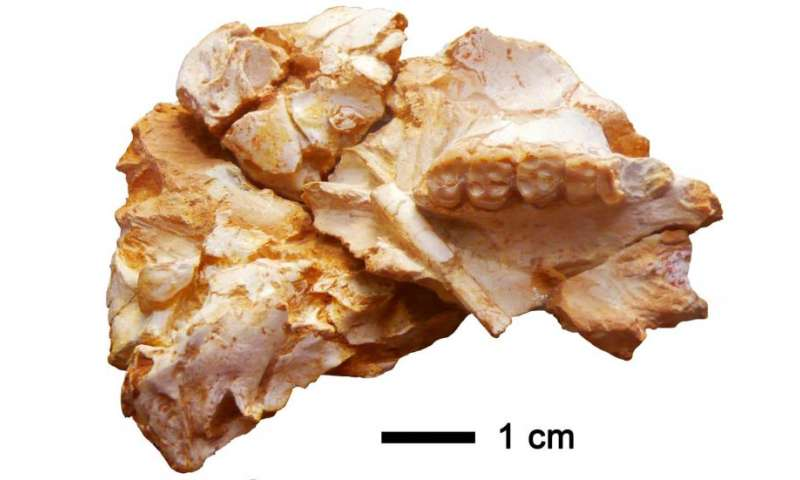 A new primate species at the root of the tree of extant hominoids