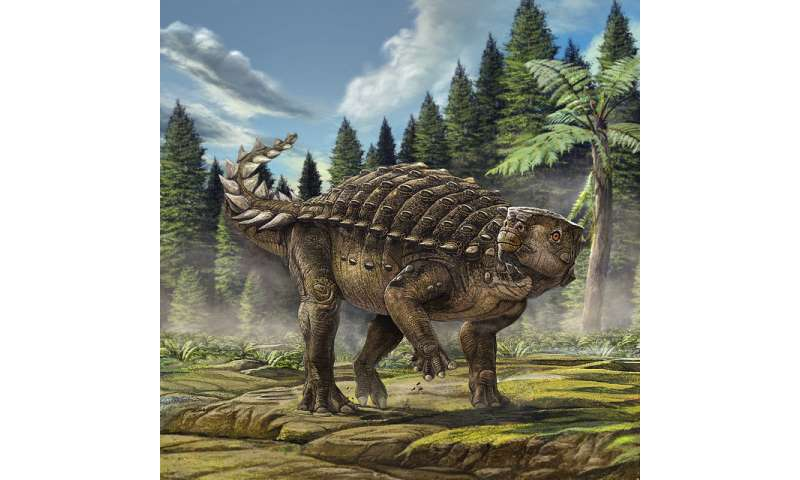 Australia's new armoured dinosaur revealed