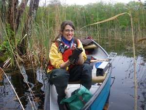 Beavers take a chunk out of nitrogen in Northeast rivers