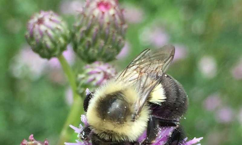 Bees to scientists: 'We're more complicated than you think'