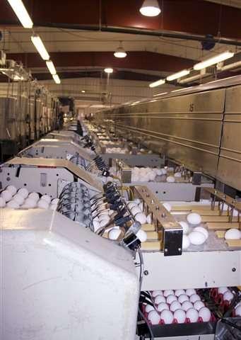 Bird flu found on South Dakota egg-laying chicken farm
