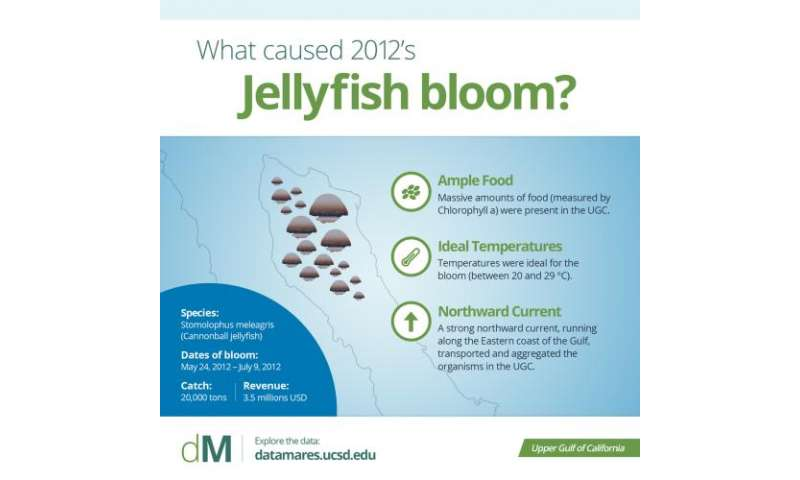 Boom or bust in a jelly bloom market