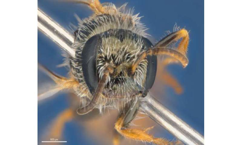 Bush Blitz: The largest Australian nature discovery project finds 4 new bee species