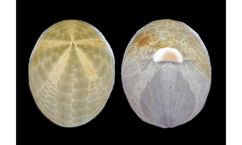 California Academy of Sciences discovers 100 new species in the Philippines