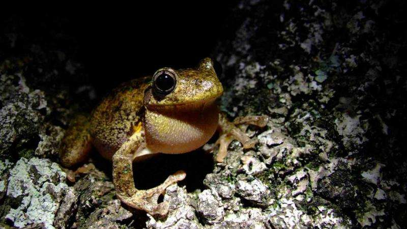 Canberra's frog populations remain healthy