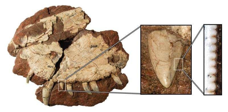 Canuckosaur! First Canadian 'dinosaur' becomes Dimetrodon borealis