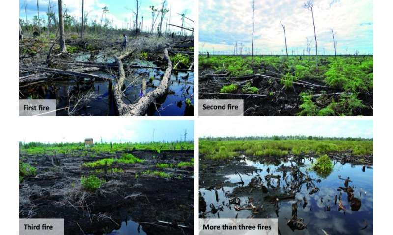 Carbon emissions from Indonesian peat fires vary considerably based on fire type, research shows