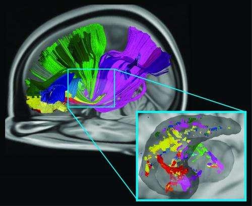 Carnegie Mellon neuroscientists identify new way several brain areas communicate