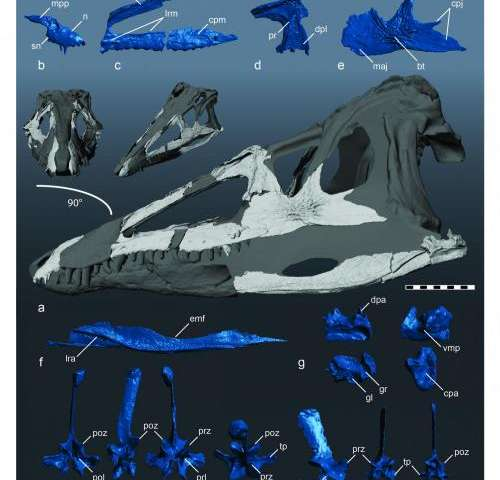 Crocodile ancestor was top predator before dinosaurs roamed North America