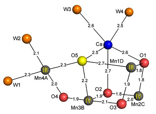 Damage-free structure of photosystem II and the synthesis of model compounds for water-oxidation