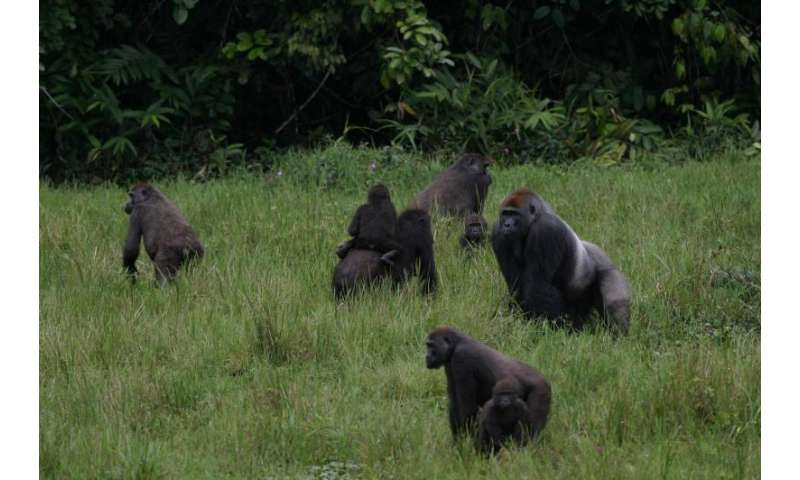 Declining great apes of Central Africa get new action plan for the next decade