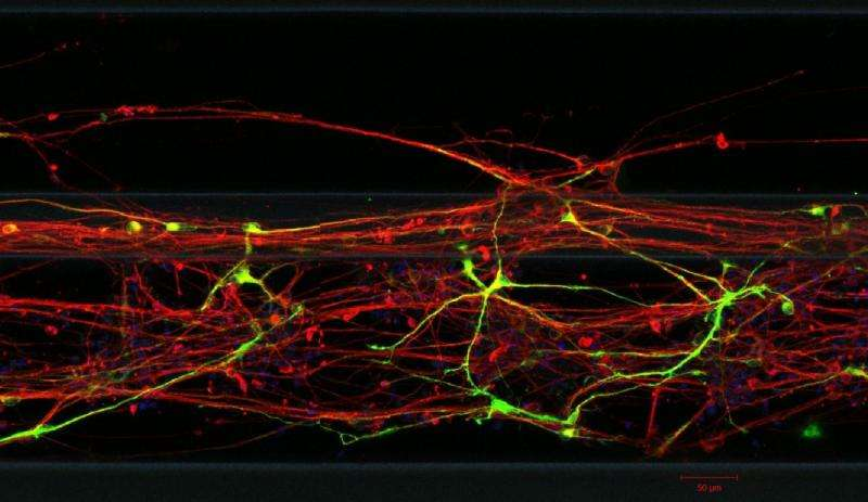 Drug discovery for Parkinson's disease: LCSB researchers grow neurons in 3-D