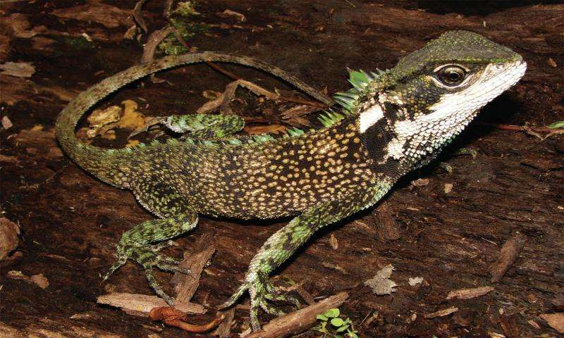 Dwarf dragons discovered in the Andes of Peru and Ecuador