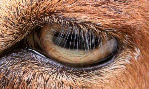 Easy on the eyes: How eyelash length keeps your eyes healthy