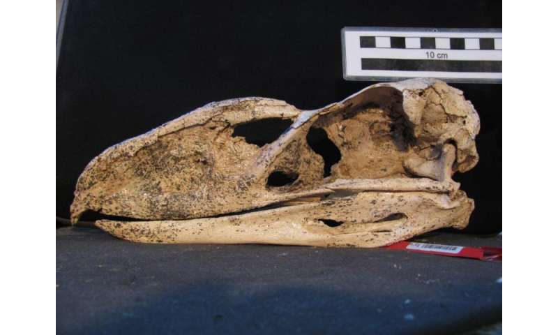 Exceptionally preserved fossil gives voice to ancient terror bird