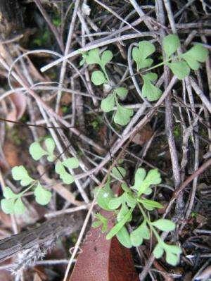 Ferns may hold key to land rehabilitation