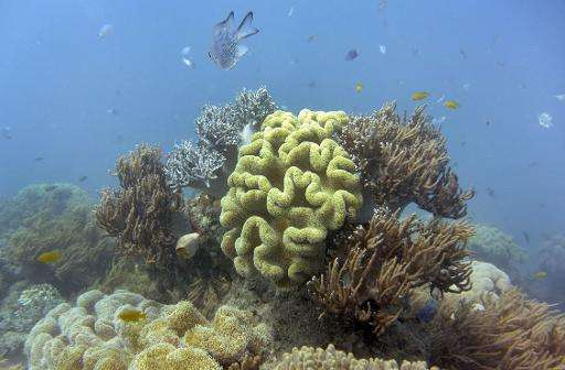 Fish swim through the coral in Australia's Great Barrier Reef on September 22, 2014