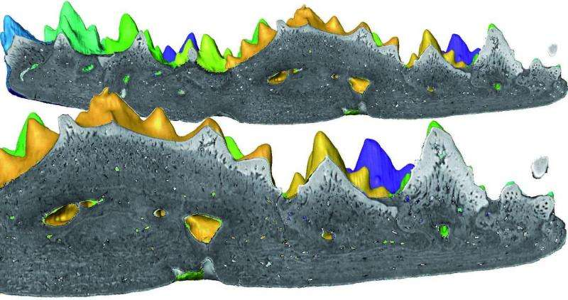 Forgotten fossil indicates earlier origin of teeth