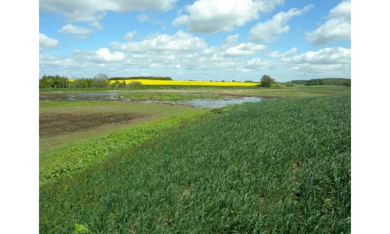El cultivo de cultivos en suelos orgánicos aumenta las emisiones de gases de efecto invernadero