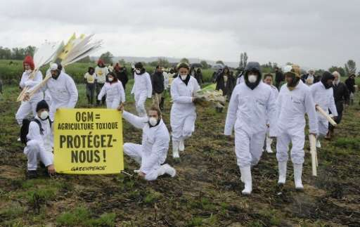 Hundreds of anti-GMO activists and Greenpeace activists protest after uprooting genetically modified mais plants, on May 2, 2014