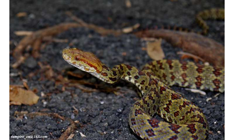 Hundreds of new species discovered in the fragile Eastern Himalayan region