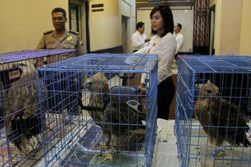 Indonesian police posing as wildlife buyers have arrested a suspected trafficker for selling protected eagles on Facebook