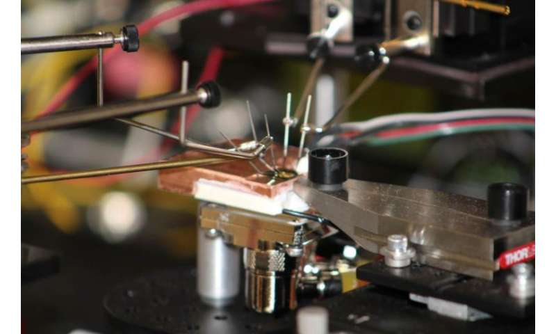 Innovations from the wild world of optics and photonics