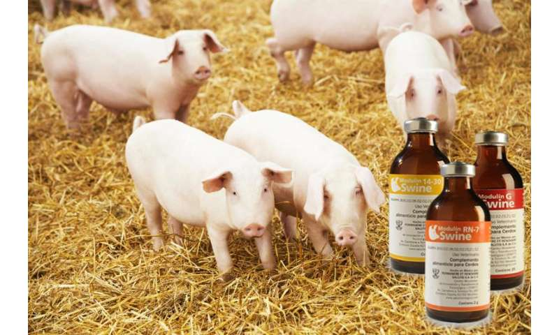 Innovative company reduces mortality in poultry and pigs with original supplement