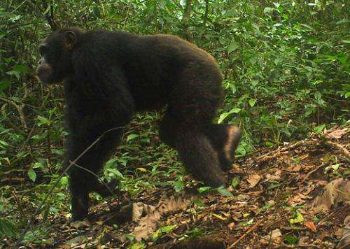 Liberian camera trap survey captures rare footage of forest elephants