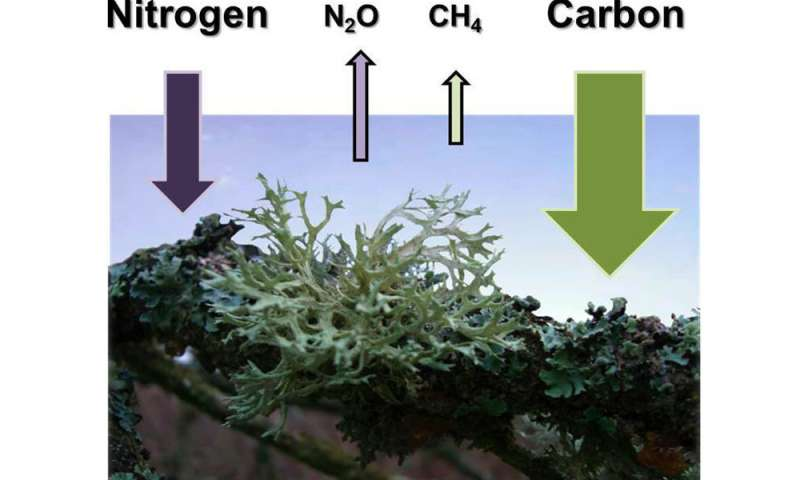 Lichens, mosses and cyanobacteria produce large amounts of nitrous oxide