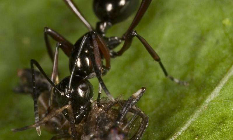 Logging means ants, worms and other invertebrates lose rainforest dominance