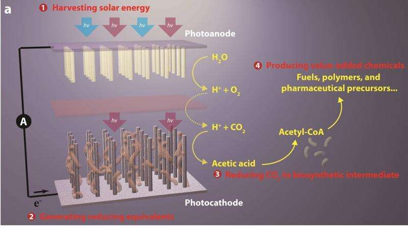 Major advance in artificial photosynthesis poses win/win for the environment