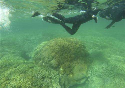 Most of Hawaii's coral recover from mass bleaching