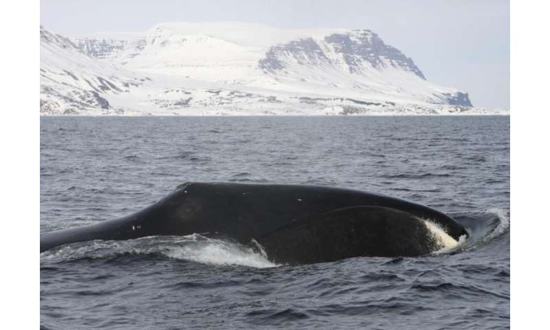 NASA contributes to first global review of Arctic marine mammals