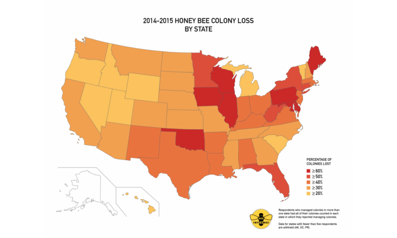 Nation's beekeepers lost 40 percent of bees in 2014-15