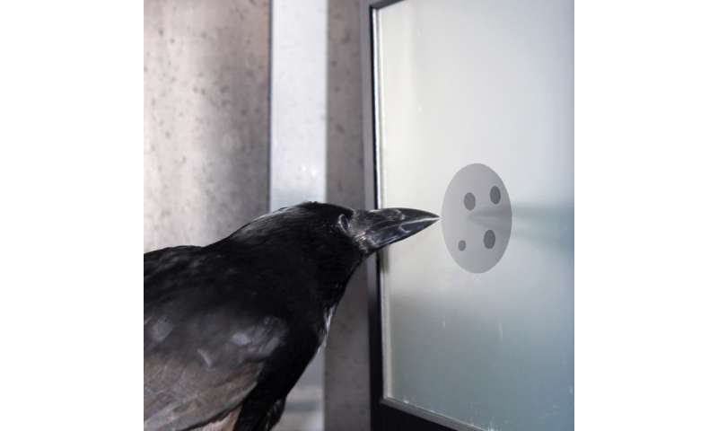 Neurobiologists discover cells in the crow brain that respond to a specific number of items